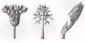 olivia huntingford artist